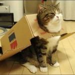 Почему кошки любят коробки и все о кошках на animal-cat.ru